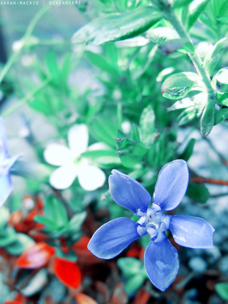 Les Fleurs Bleues by sarah-mackie