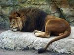 The lion sleeps tonight by eReSaW