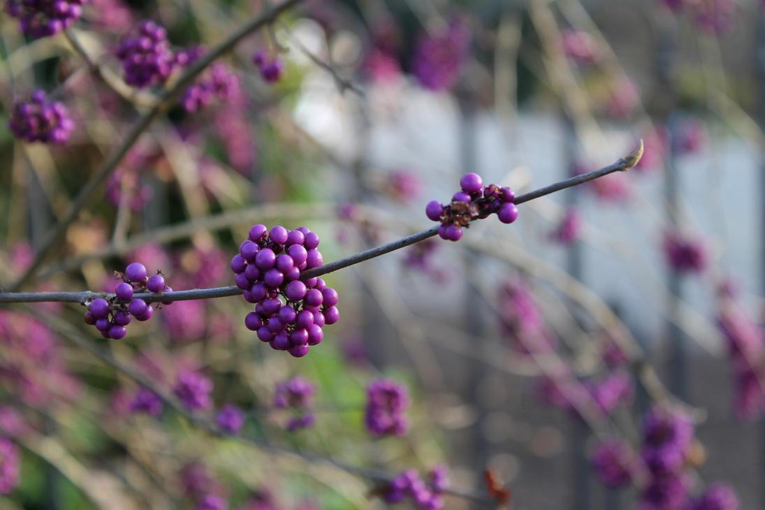 Deep Purple by eReSaW