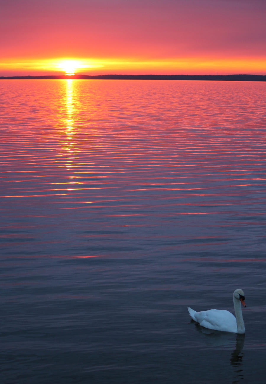 Swan Lake by eReSaW