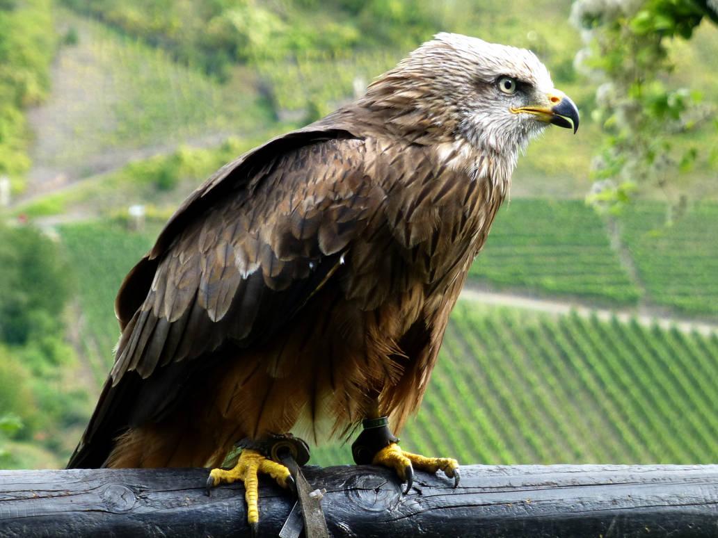 Bird of prey by eReSaW