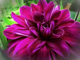 Purple Sensation   by eReSaW