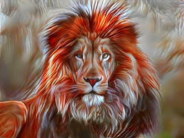 A Lion does not turn around  when a small dog bark