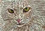 Wool kitten by eReSaW