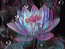 The tears of the water lily by eReSaW