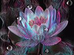 The tears of the water lily