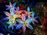 Stars in my garden