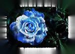 True Love is like a blue rose