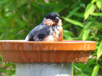 Bathtub matching the plumage by eReSaW