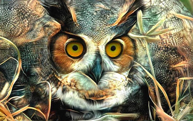 Owls always have that look ... by eReSaW
