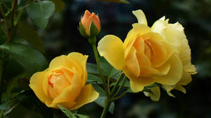 Flowers are like sunshine for your soul!
