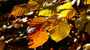 How beautifully leaves grow old ! .....