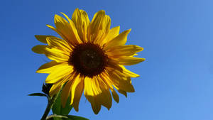Advice from a Sunflower :