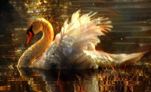 <b>Swans Are Majestic,beautiful Looking Creatures ...</b><br><i>eReSaW</i>