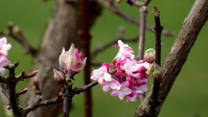 Winter can also be fragrant