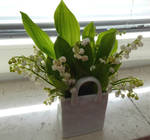 Lilies of the valley greet at Pentecost