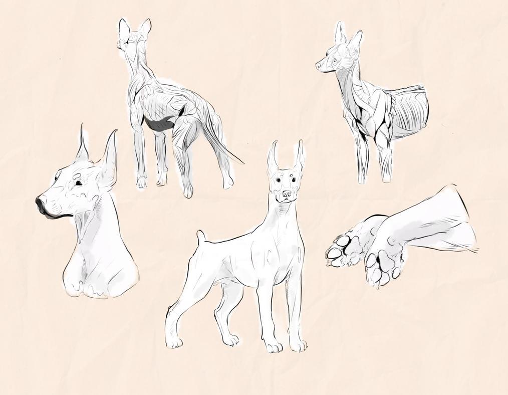 Canine Study by SukiMask