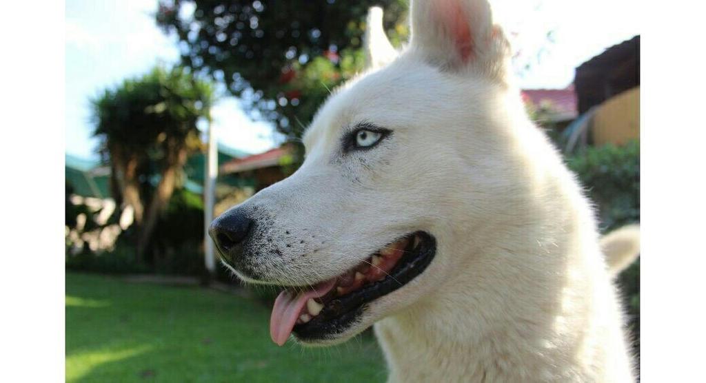 Good Doggo by Ambilina