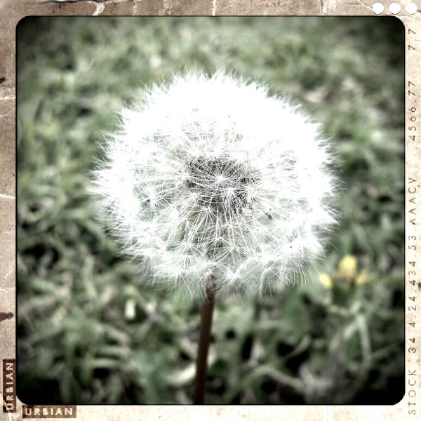 Too pretty to make a wish by mom2Ethan-Logan
