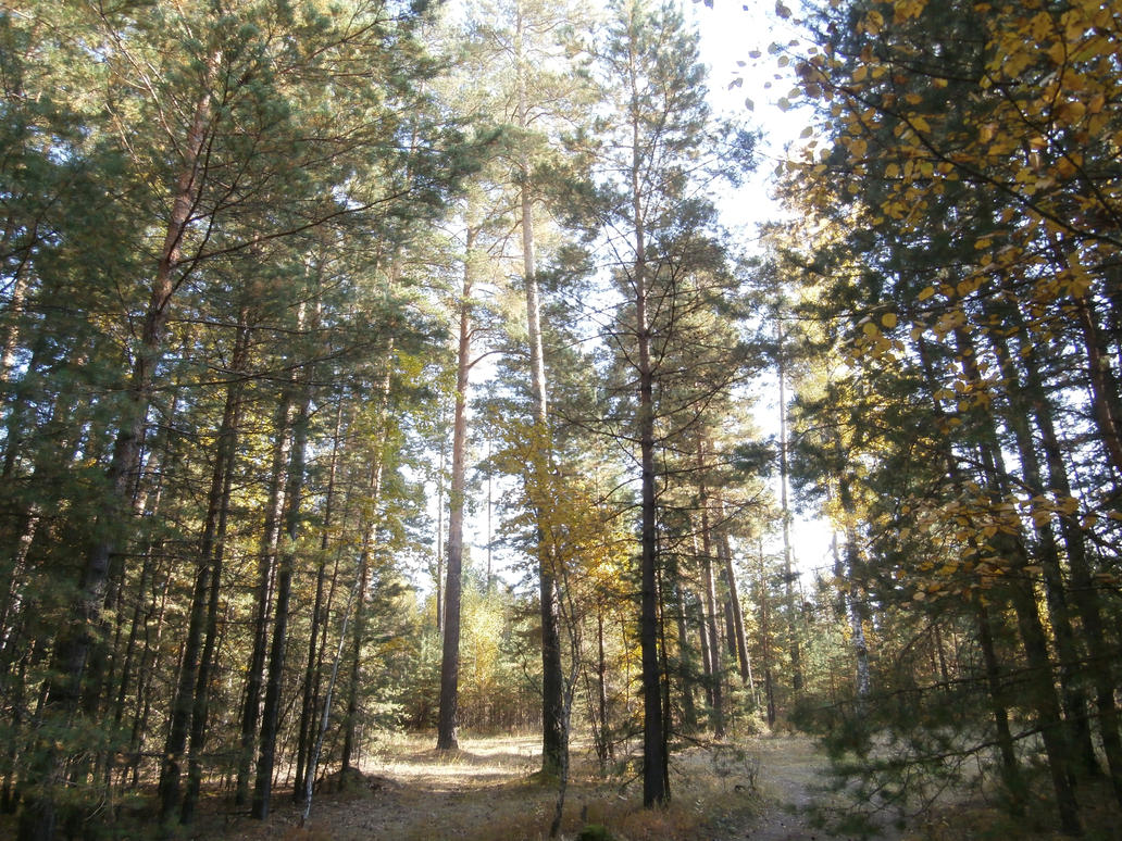 Photos of forest (2) by shprotte