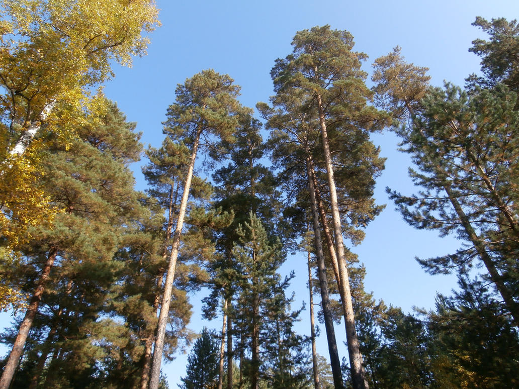Photos of forest (3) by shprotte