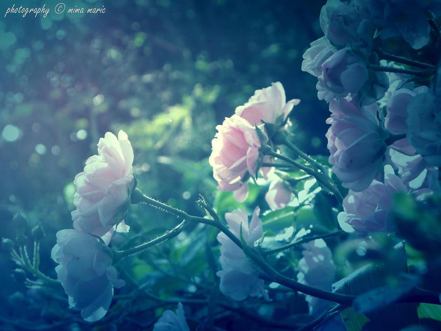 Secret Garden by Cassiopea71