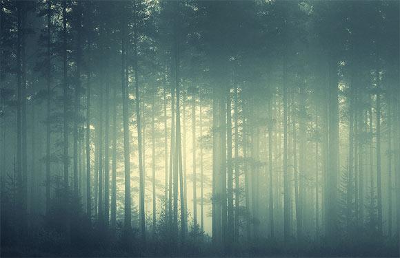 Foggy Forest by Hogwarts-Girls