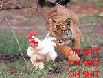 Chase the Chicken
