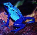 Frog en Azul by Rock--ME