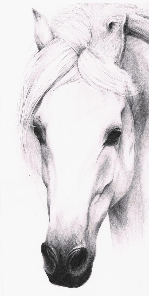 Horse by DivianaAjatar