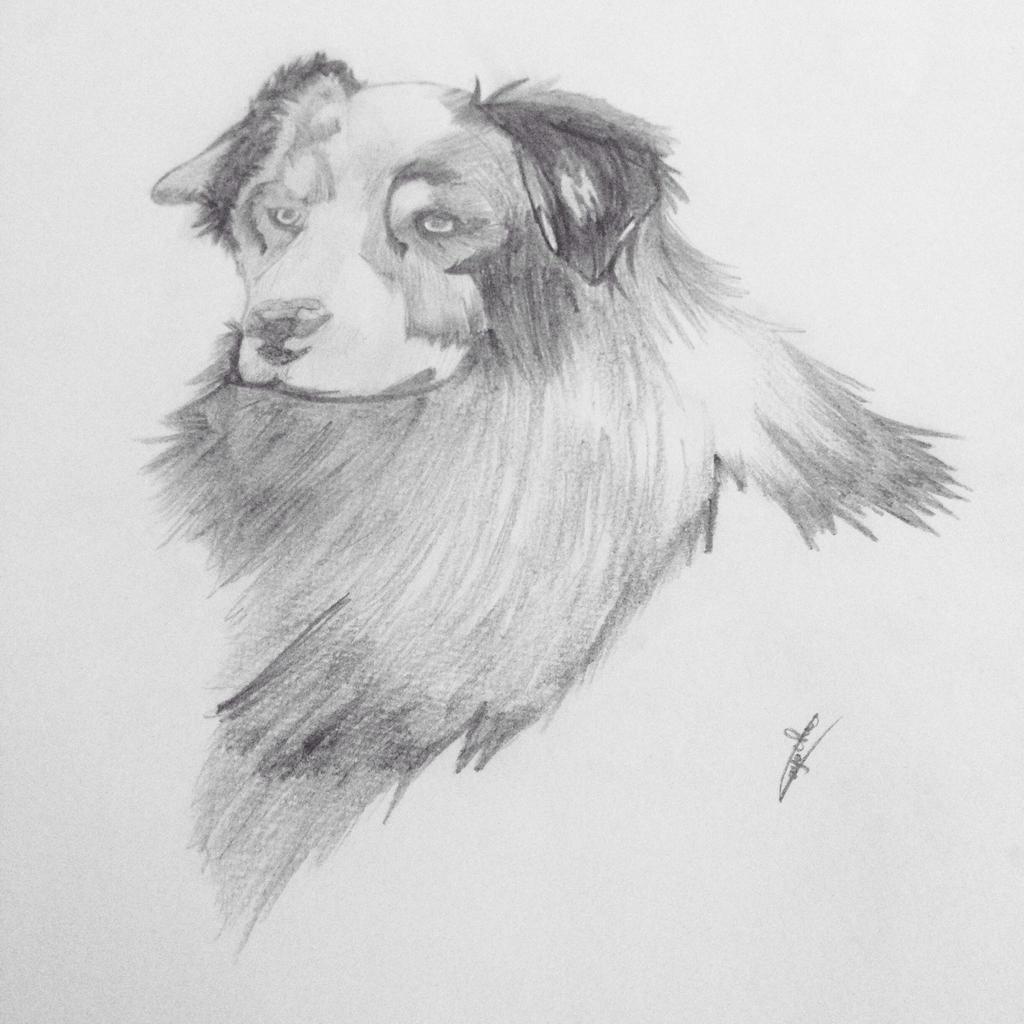 Dog  by patooo27