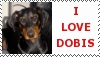 doberman stamp by schnuffibossi1
