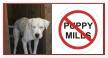 stop puppy mills 2 by schnuffibossi1