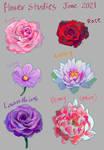 Little flower studies