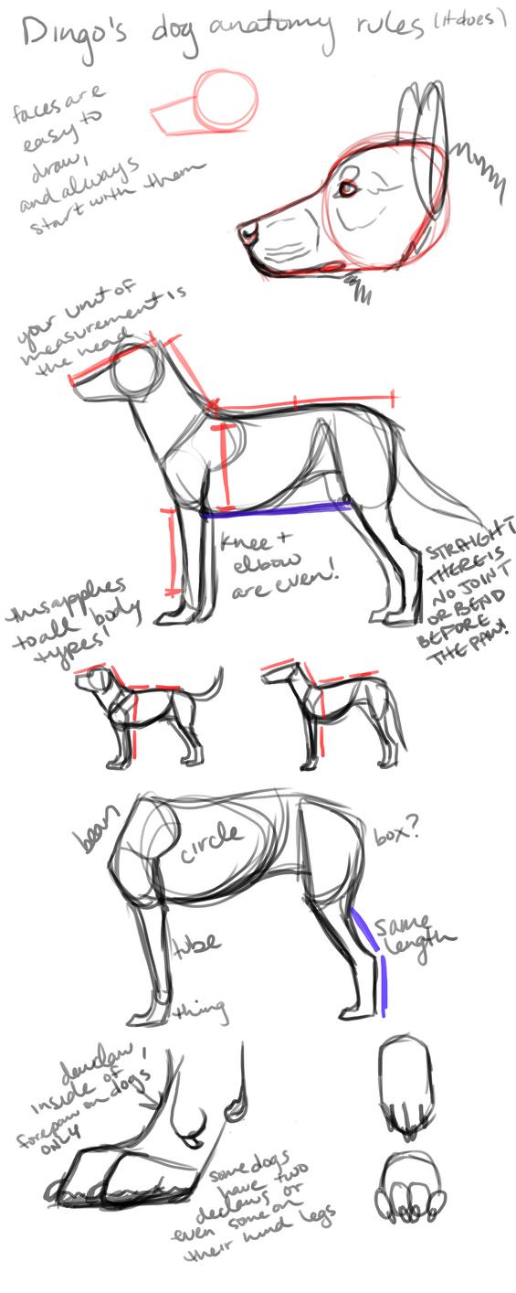 Dog Anatomy Images Gallery - human body anatomy