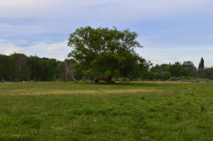 karebear-stock tree 1 by karebear-stock