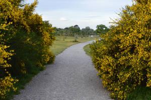 karebear-stock path 1 by karebear-stock