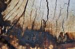 karebear-stock wooden texture 2