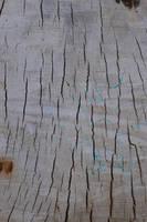 karebear-stock tree texture 1 by karebear-stock
