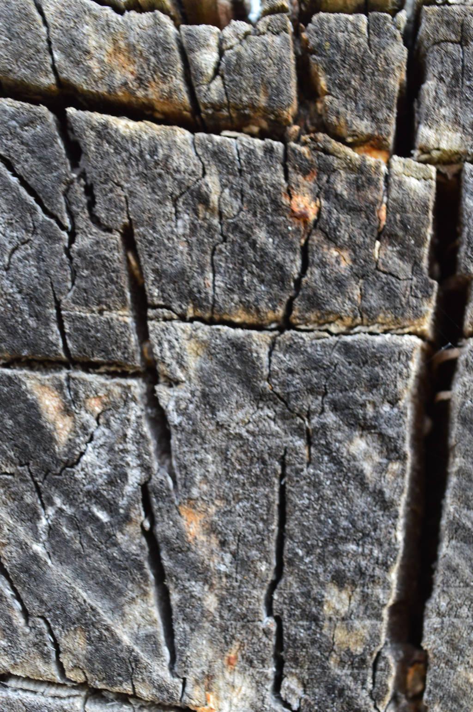 karebear-stock bark texture 1 by karebear-stock
