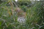karebear-stock shallow 1