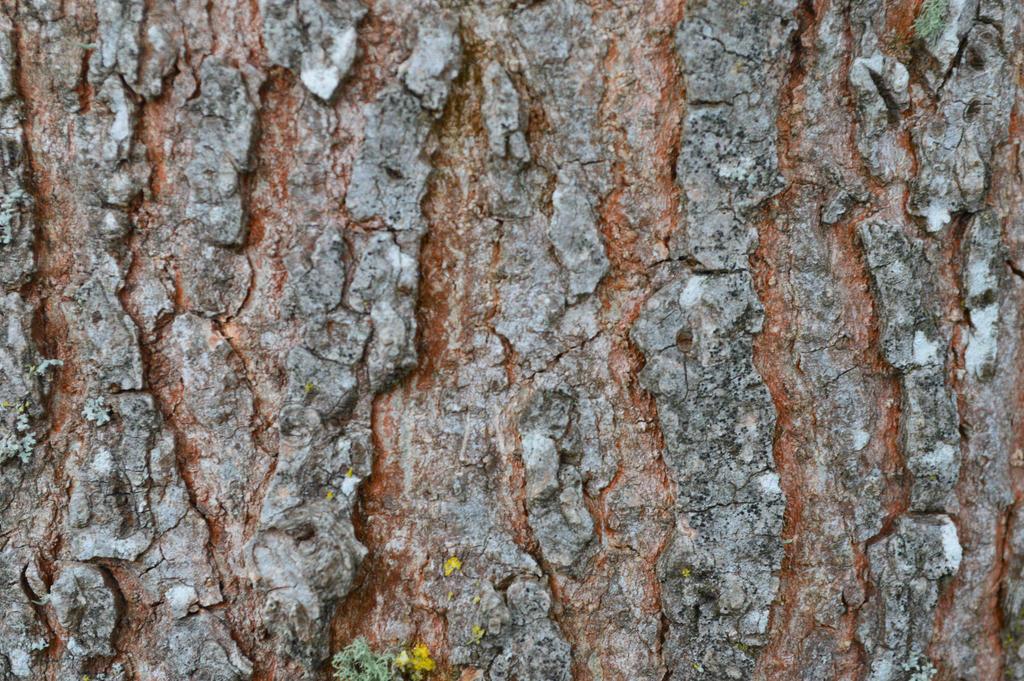 karebear-stock bark texture 2 by karebear-stock