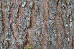 karebear-stock bark texture 2 by karebear-stock