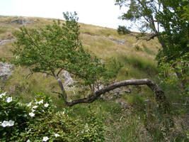 karebear-stock branch 2 by karebear-stock