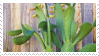 2 / cactus stamp by lonelymattress