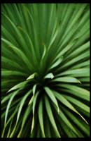 Random Plant by stevfusion