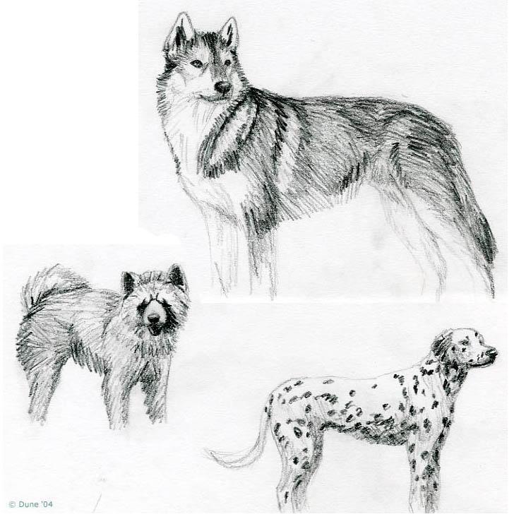 Scribble Sketch Drawing : Scribble sketch dogs by dunewolf on deviantart