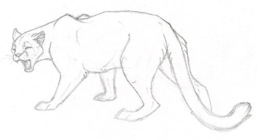 Sketch Of Cougar