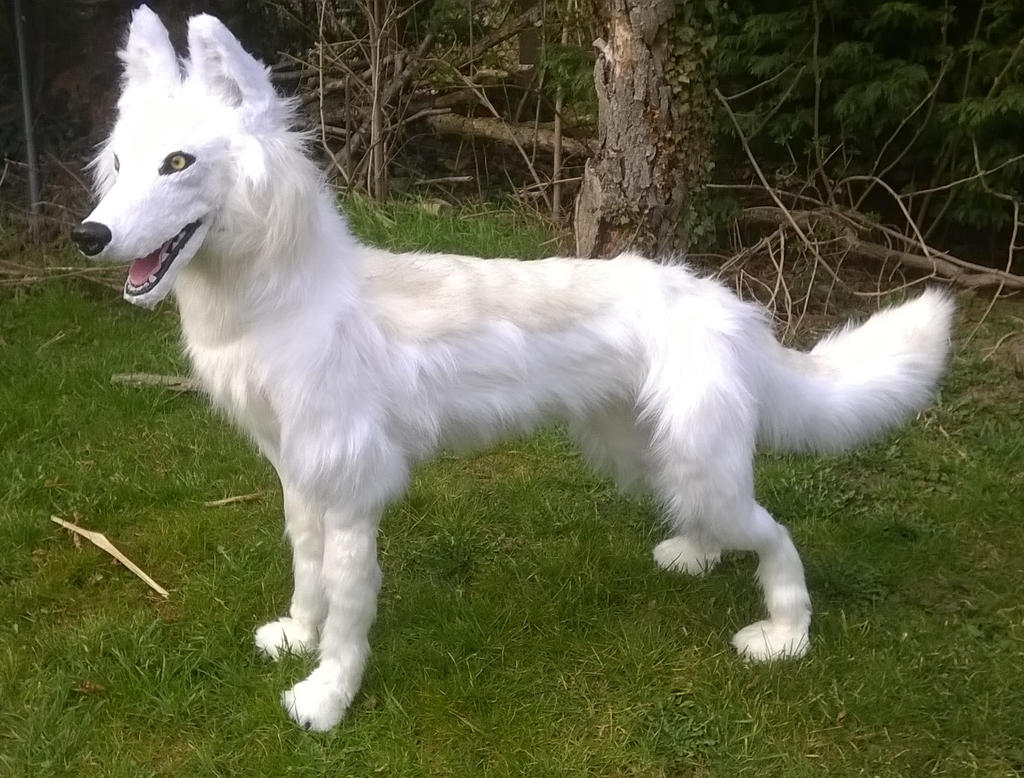 Mysterious wolflike creature shot on a ranch in Montana