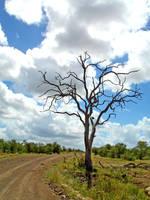 AFRICA ROAD by JIMENITUS